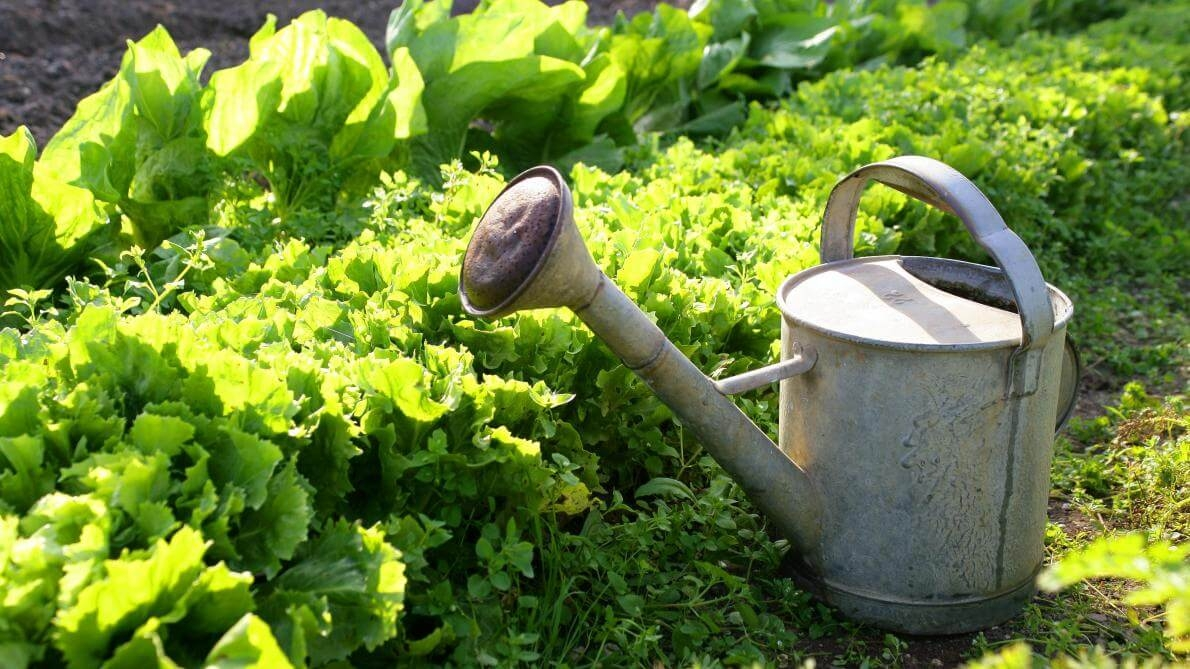 Arroser son jardin par temps de canicule