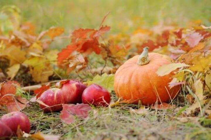 Ramasser les légumes à l'automne