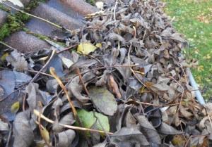 chéneau bouché par les feuilles